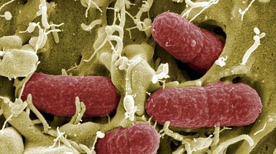 bacteria-coli--644x362